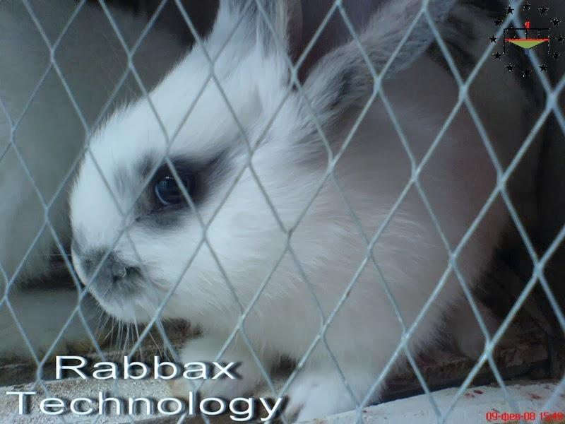 Годівля кролів