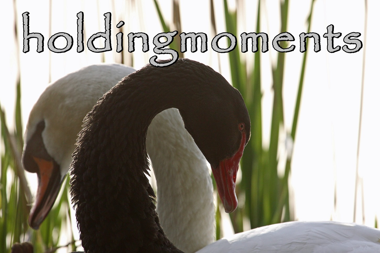 holdingmoments