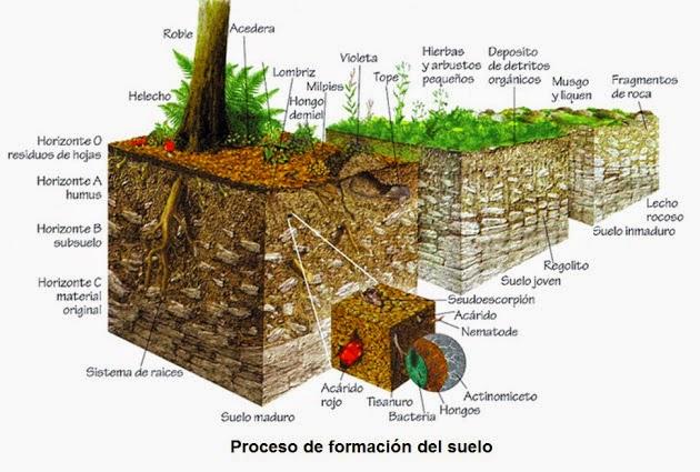 Respira alhama y el temple respetamos el suelo for Importancia de los suelos