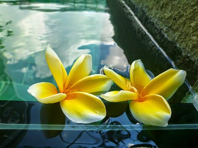 Flor jepung Bali