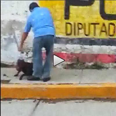 Homem idoso bate seu cão, então ele cai