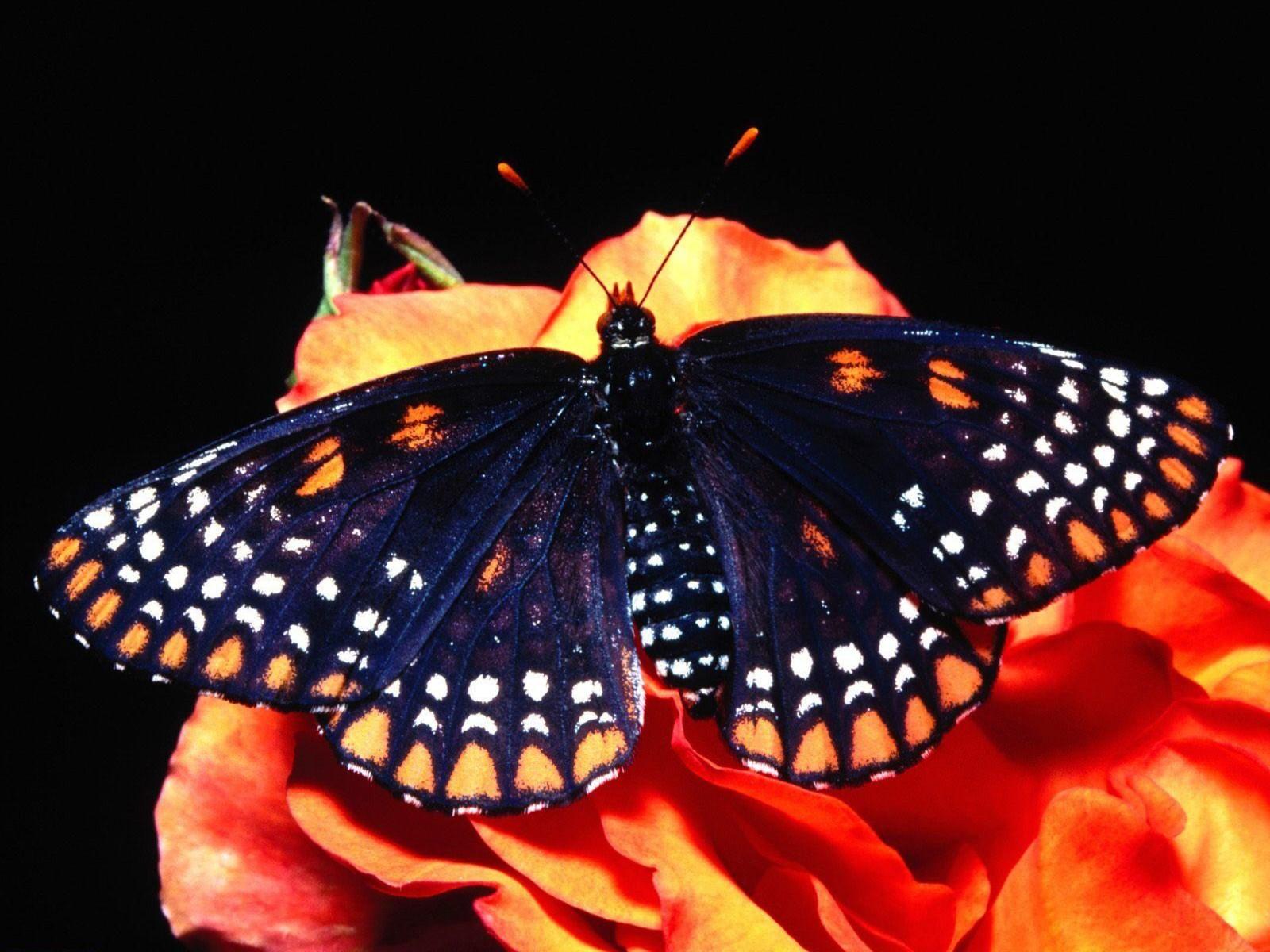 http://1.bp.blogspot.com/-aiippUTHLv0/TlvB2s8bSBI/AAAAAAAAAsA/GLdIGGe1pwg/s1600/butterfly-020.jpg