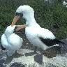 imagenes de aves