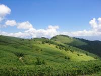 笹の絨毯 富士見台高原