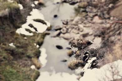 Vacas muertas Dakota
