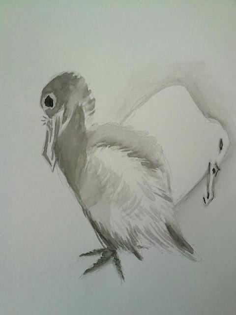 copia en tinta de un dibujo de cormoranes