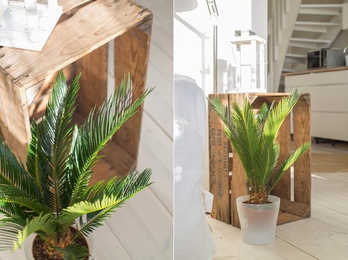 viherkasvit sisustuksessa vanha puulaatikko moderni ja vanha yhdessä vihersisustaminen