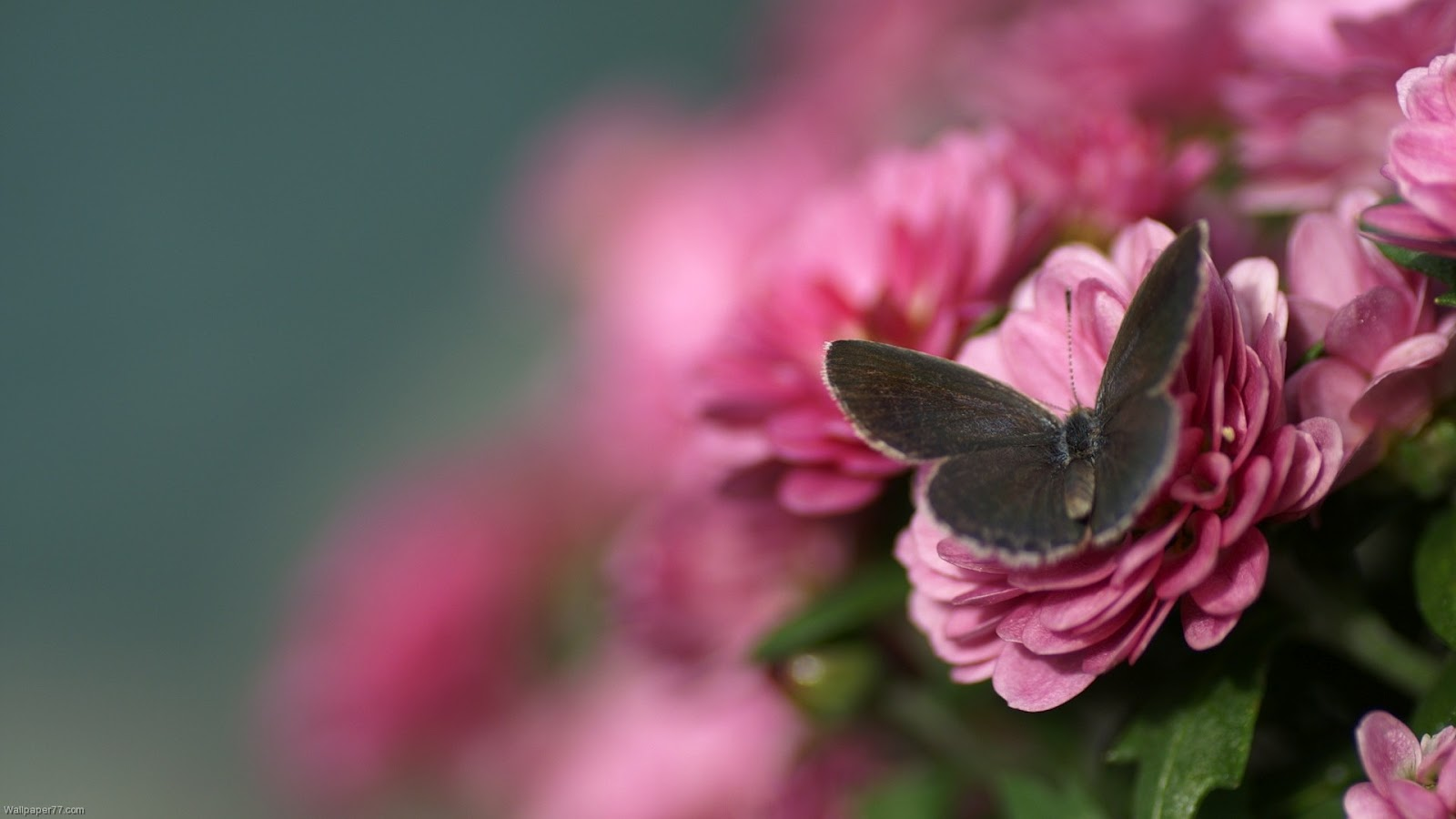 http://1.bp.blogspot.com/-ajrevWli6BU/T9GVRahilRI/AAAAAAAAD-M/7R6Cn8SUwU8/s1600/Bloom+Flower+Wallpaper+1.jpg