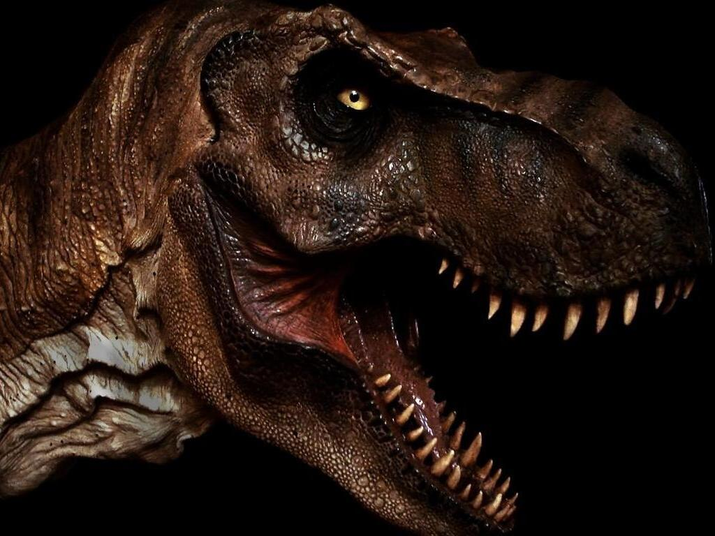 Boringly cool pancho 39 s first post for Tyranosaurus rex