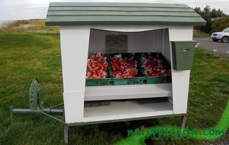 los tomates de Deildartunguhver