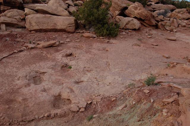Fossilized Dinosaur Footprints Near Moab Utah