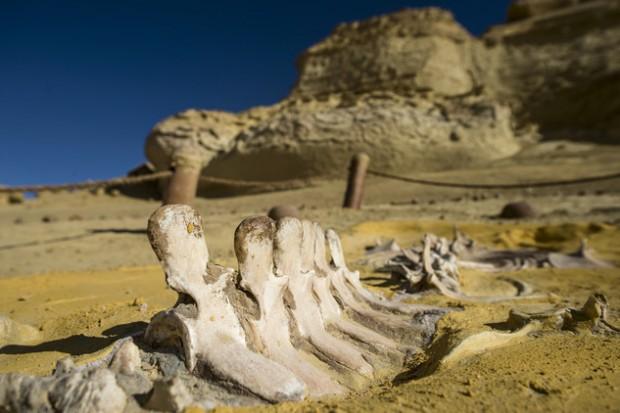 وادي الحيتان في مصر 5698d9a4c46188147a8b457b-620x413