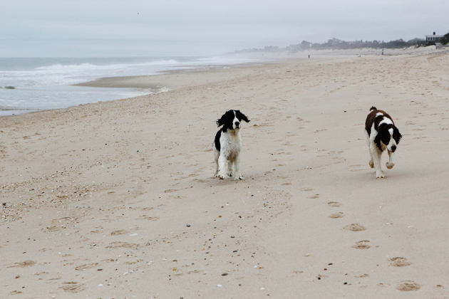 dogs on hampton beaches