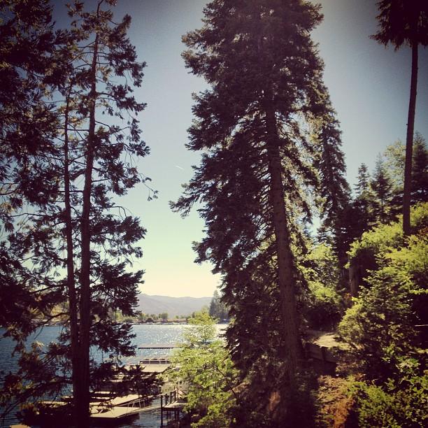 lake arrowhead, tall trees