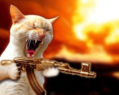 imagenes graciosas de gatos con pensamientos y pistolas