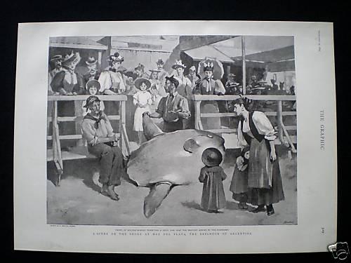 explorando la tierra Registros del pez luna Mola mola en el mar