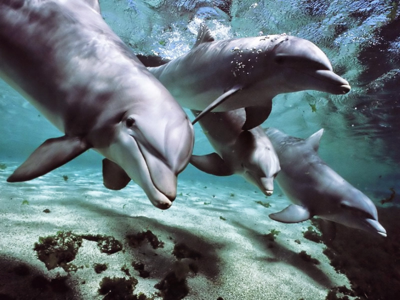 Sea creature porn nudes clip