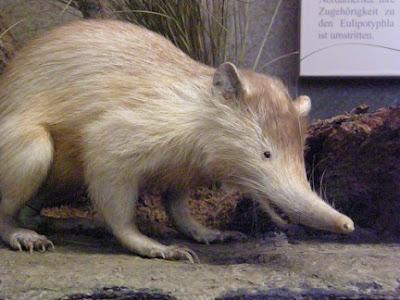 animales-raros-almiqui