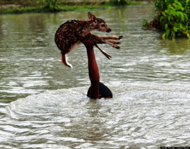 #14. A young boy in Bangladesh risked his life to save a deer from drowning. - 24 Happy Animal Photos Made Possible By The People Who Saved Them.