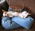 Reciclaje de jeans: Almohadón para mascotas