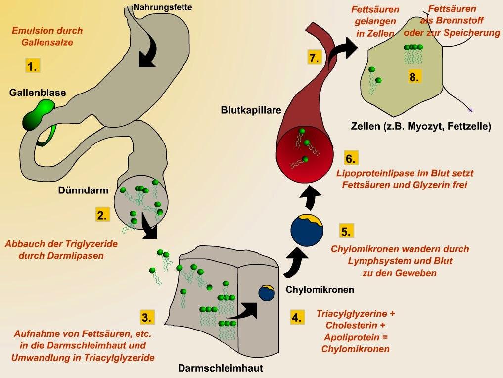 Miostimuljazija den Bauch zu entfernen