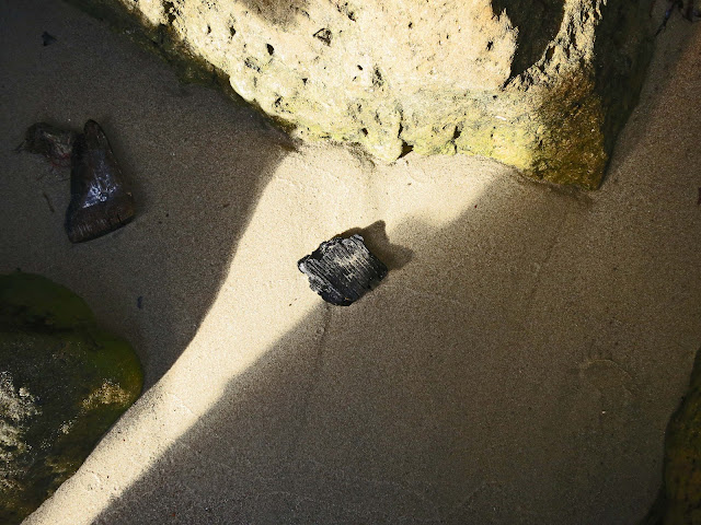Small pieces of black, burnt wood behind rocks on sandy beach