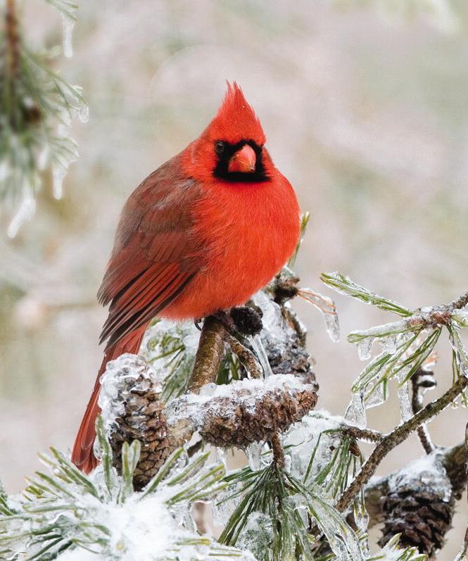 Winter bird images - photo#25