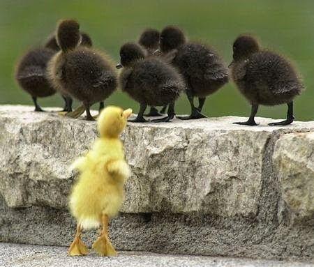 Vive a tolerância na base de todo o progresso efetivo.