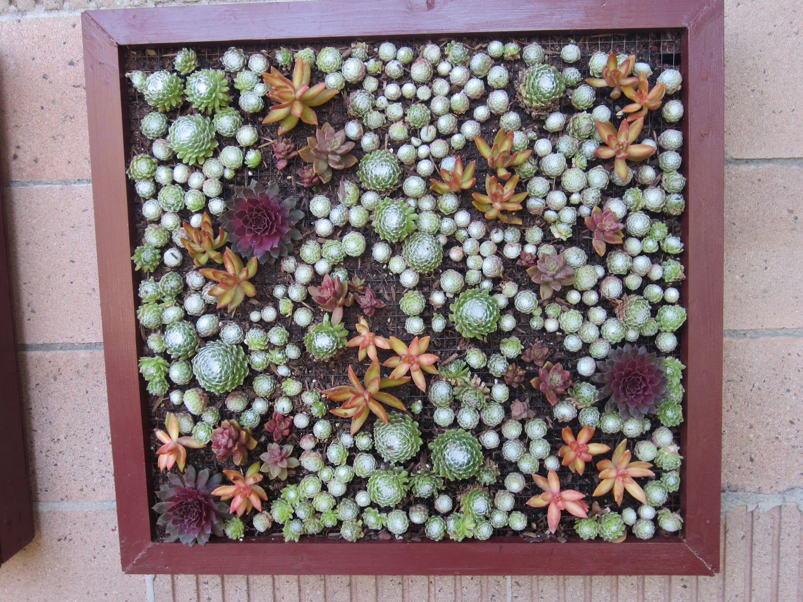 Captivating Vertical Gardening   Triptych