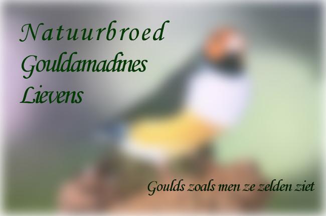 NATUURBROED GOULDAMADINE Lievens<br>