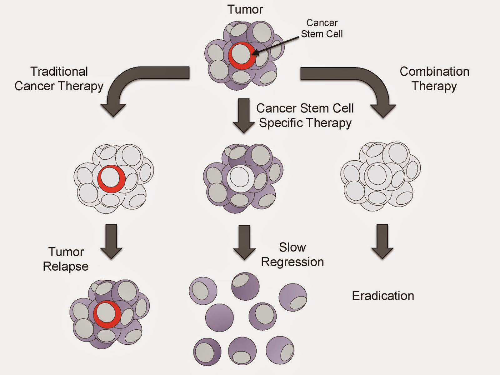 an analysis of stem cell that produce so much controversy So when looking at the issue of stem cell research controversy swarms embryonic stem cell and they in turn seemed to produce a variety of blood stem cells.