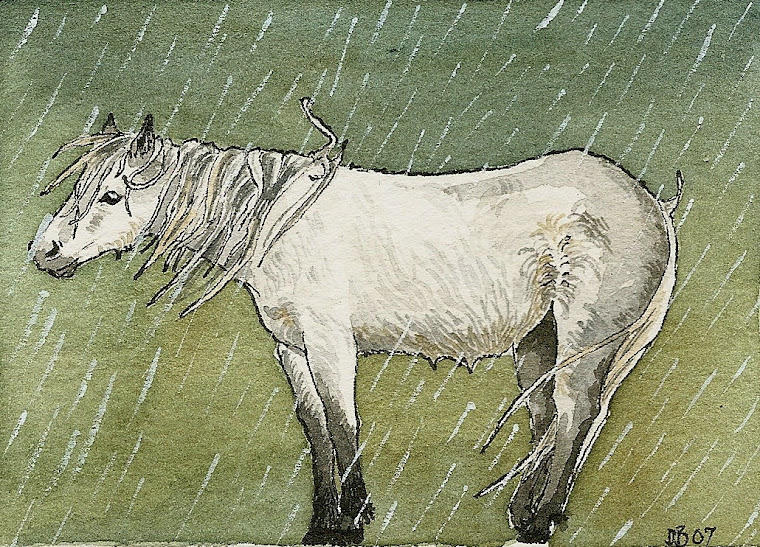 windswept pony