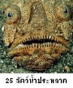 25สัตว์น้ำประหลาด