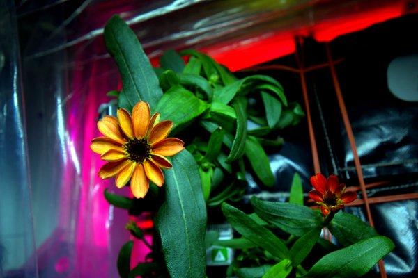 galaxy plants plantas universo