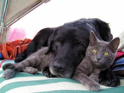 lindos gato e cachorro, cat and do, catito y perro, animais amigos, animais fofos, gato fofo, cão fofo, amigos de rabo, amor entre cão e gato, todo cão deveria ter um gato