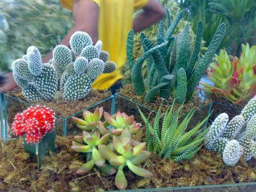 para aqueles que gostam de flores e plantas, mas não