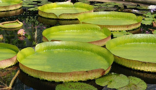 Kew Garden's