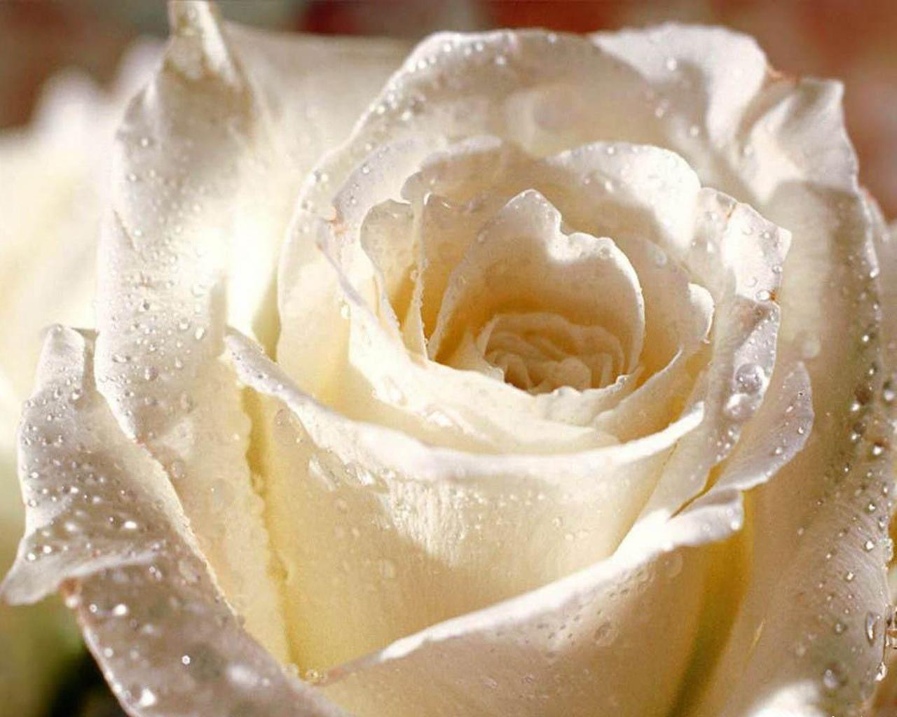 http://1.bp.blogspot.com/-anVvUCJO0z4/T9r9QAt02GI/AAAAAAAAALo/BZsP4lpxpW8/s1600/flower-wallpaper-49.jpg