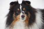 Theo - familiens hund