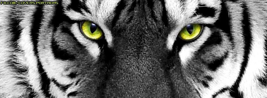 tigre,portada,facebook,foto,nuevo,verde,gris,animales,feroces