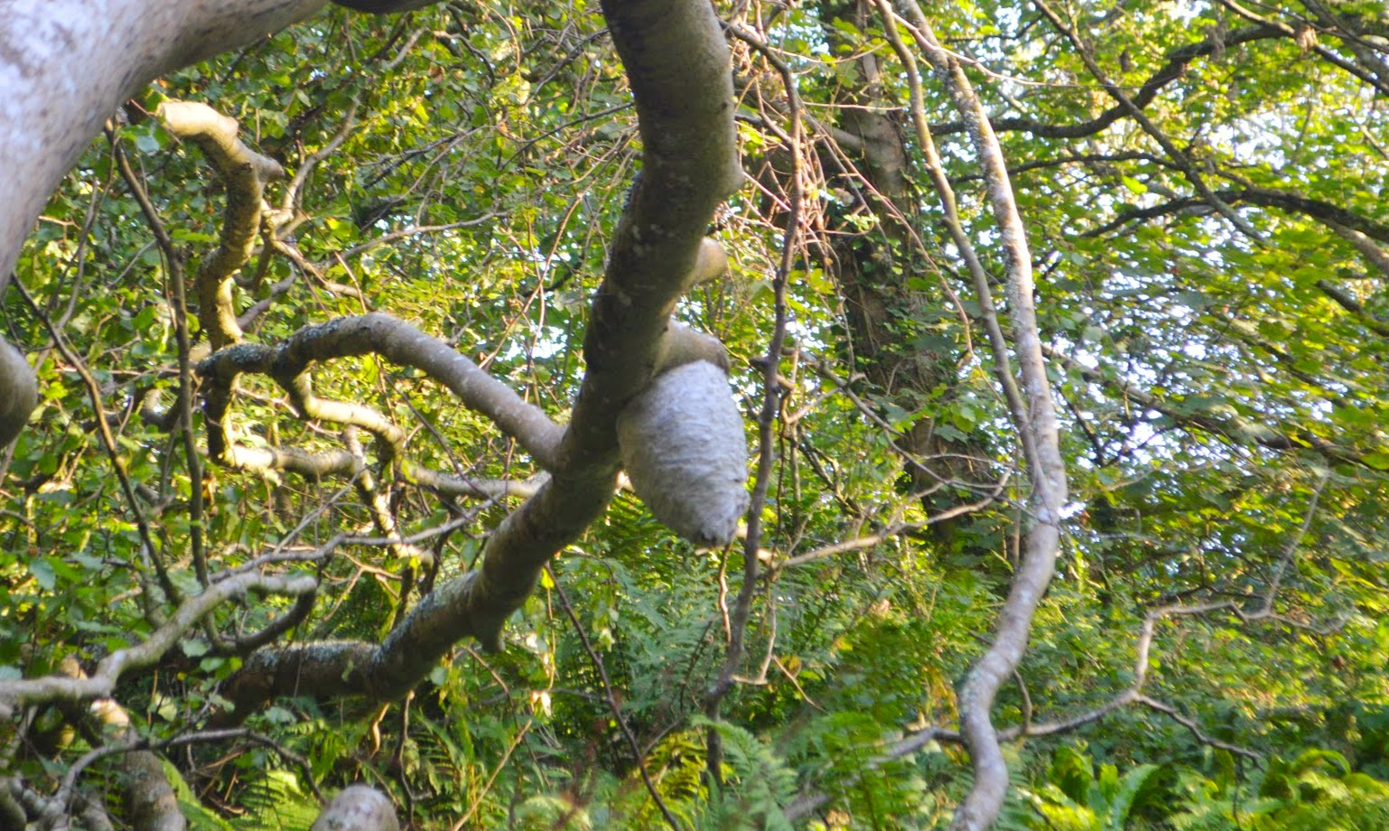 Wasp's Nest Monk Haven Pembrokeshire Wales Church Beach Rope Swing Family Fun day out