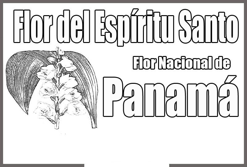 COLOREA TUS DIBUJOS: Dibujo de la Flor Nacional de Panamá