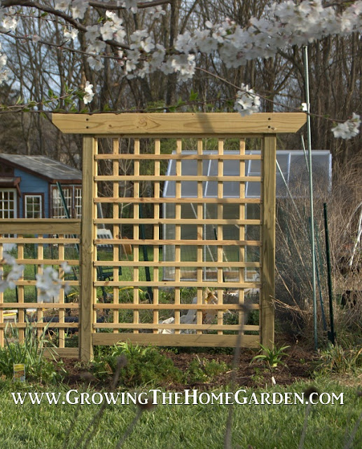Building an arbor style trellis growing the home garden How to build a trellis