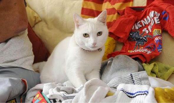 Kucing ini punya keupayaan yang luar biasa