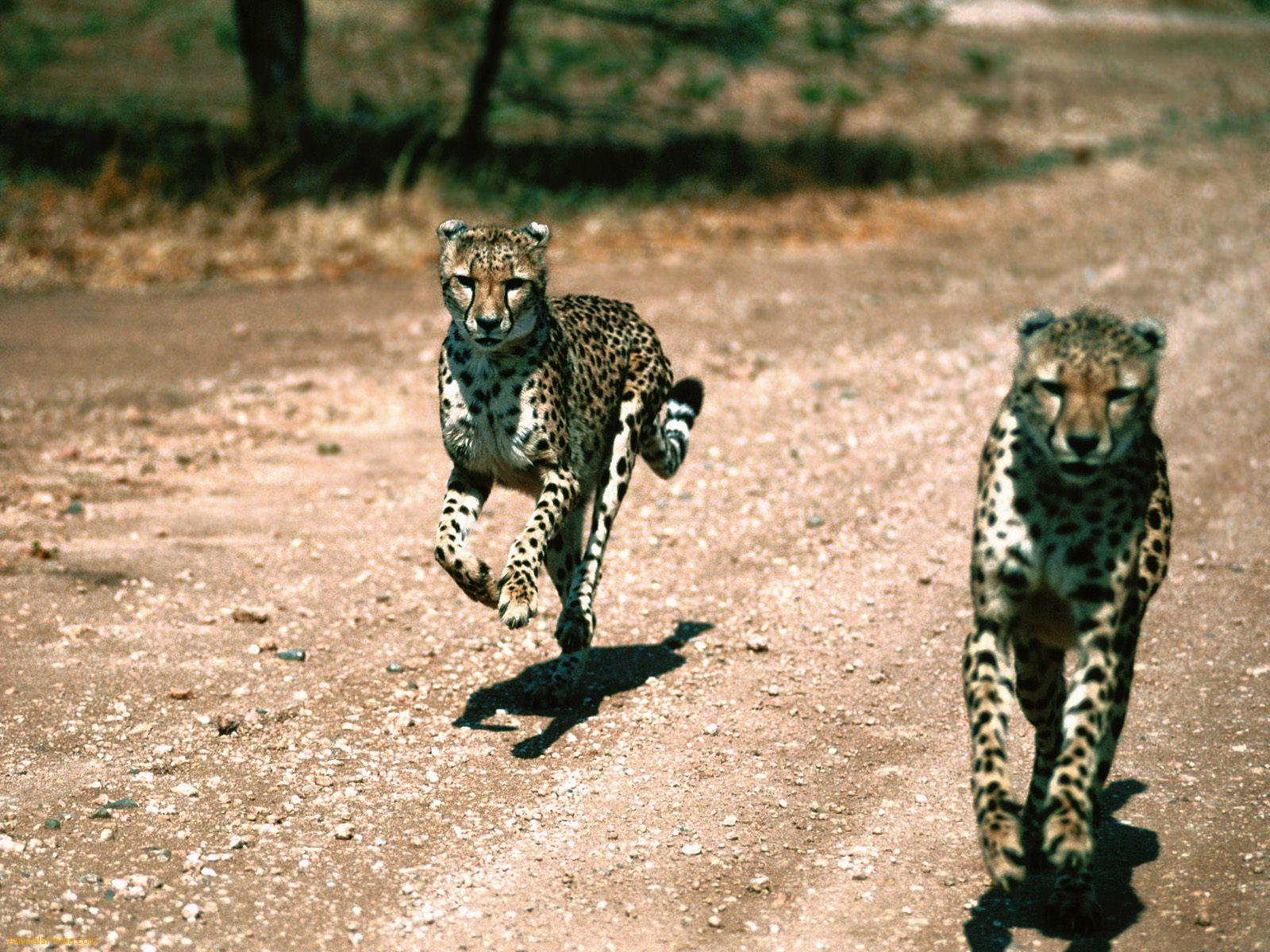 Safaris in Tanzania the beauty of the serengeti wildebeest animal ...