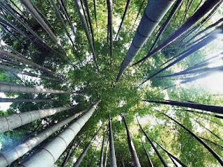 """Об отношениях: """"Чудо китайского бамбука"""""""