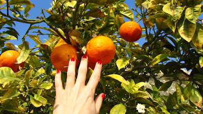pomarańcze na wyciągnięcie dłoni
