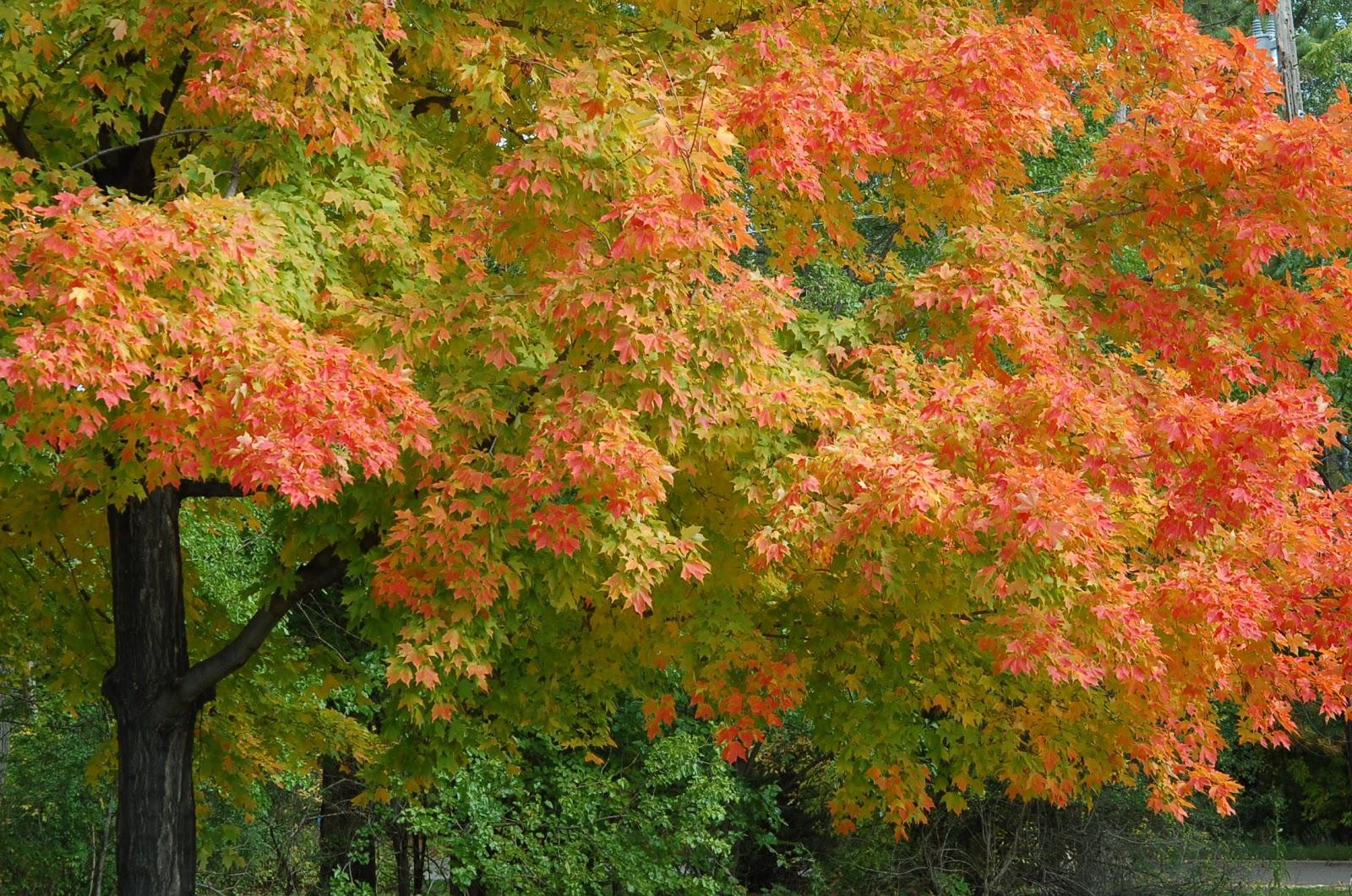 Image gallery deciduous plants for Garden deciduous trees