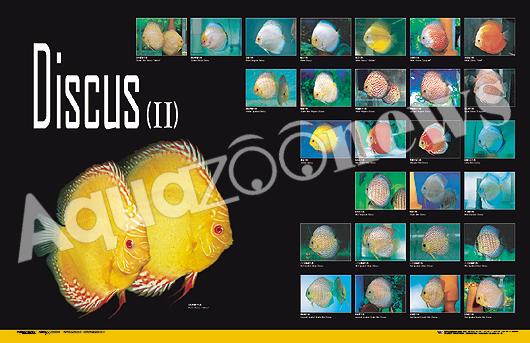 Z Fish Inc Toms Fish Inc.