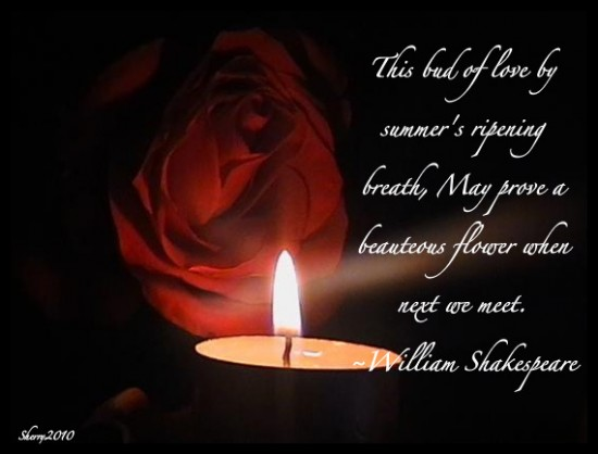 gallery for red rose pictures with love quotes in english